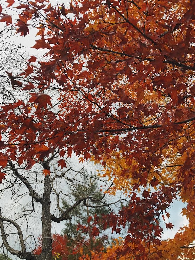 真っ赤に紅葉した木の写真