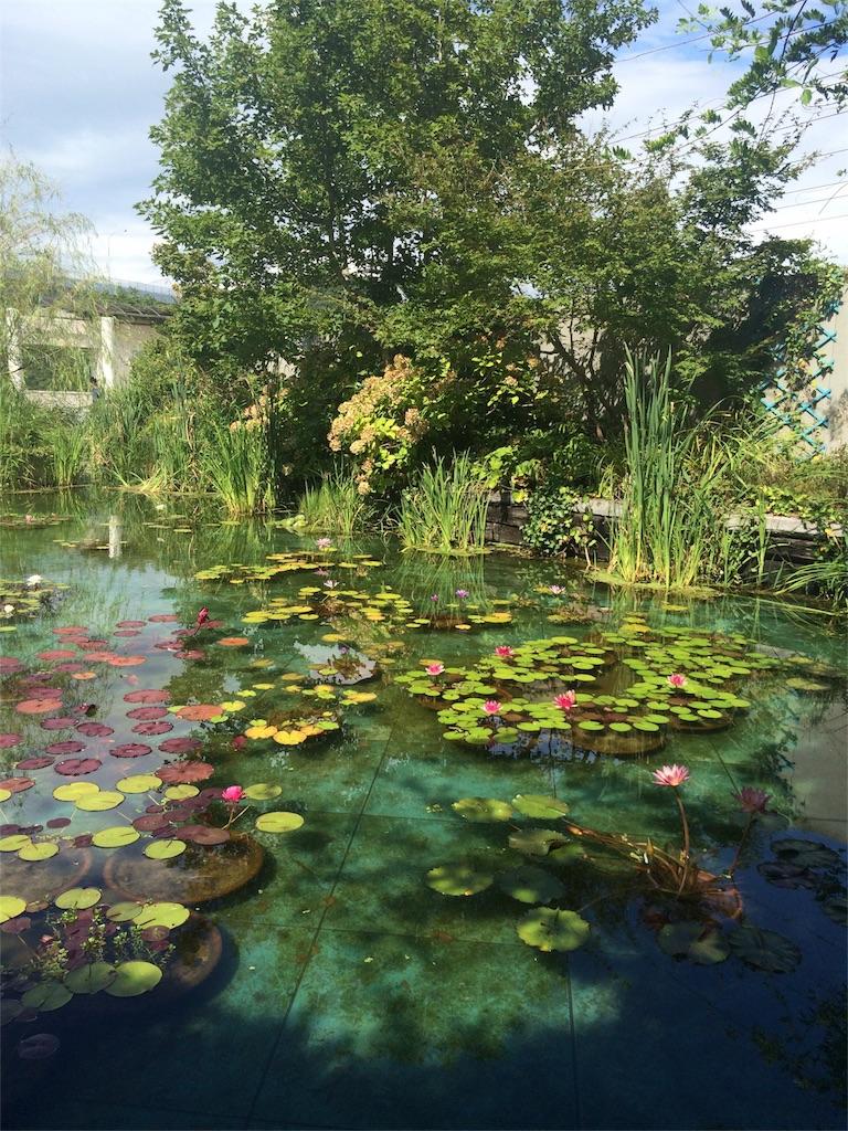大塚美術館のモネの蓮池の写真近景