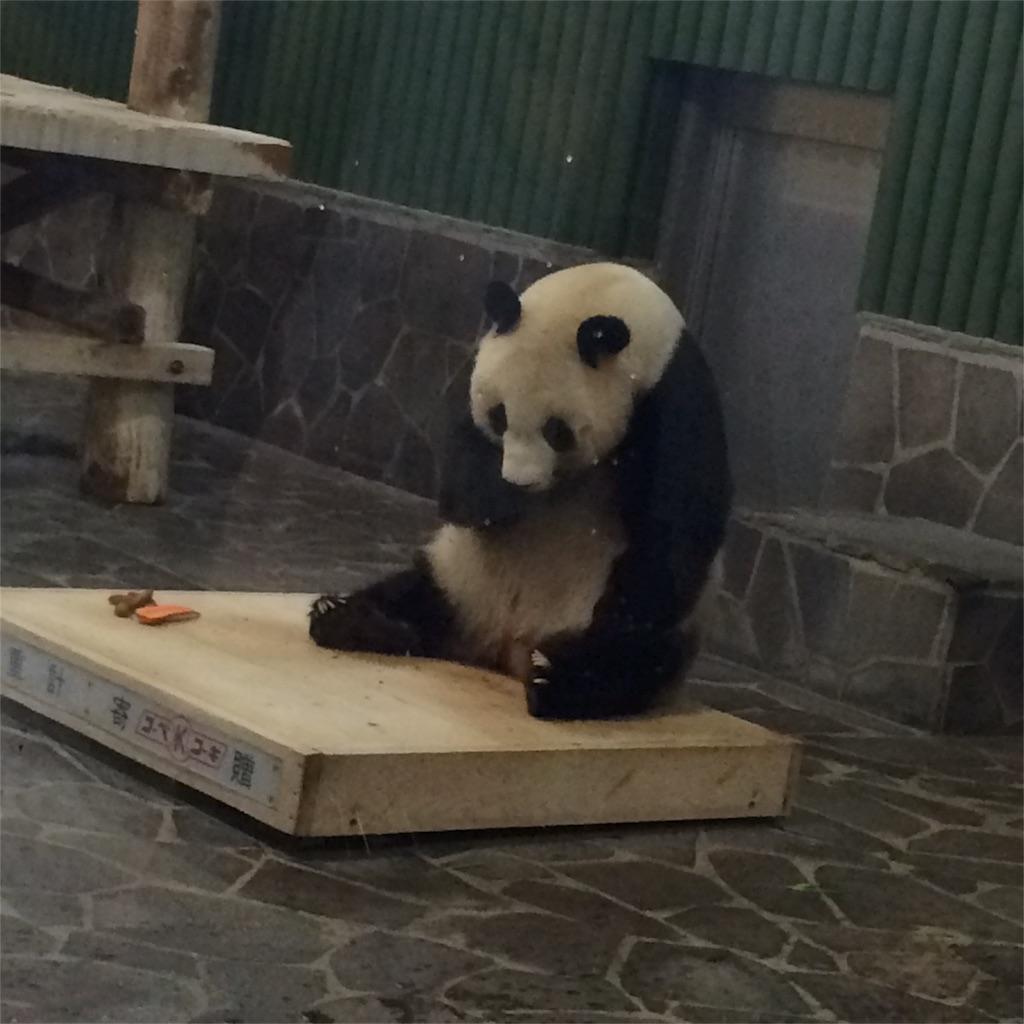 背中を丸めて台の上で餌を食べるパンダの写真