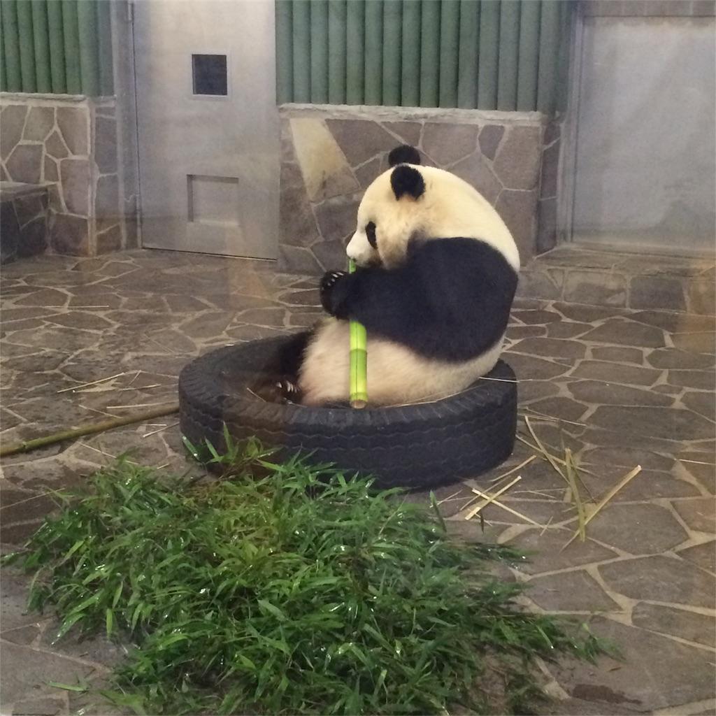 タイヤの中で笹を食べるパンダのアップ写真