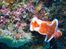 手作りと海の生物大好きダイバーのブログ