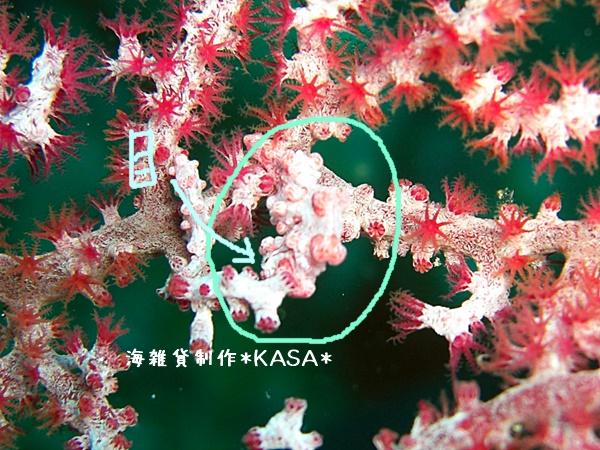 f:id:kasa-umi:20170822095358j:plain