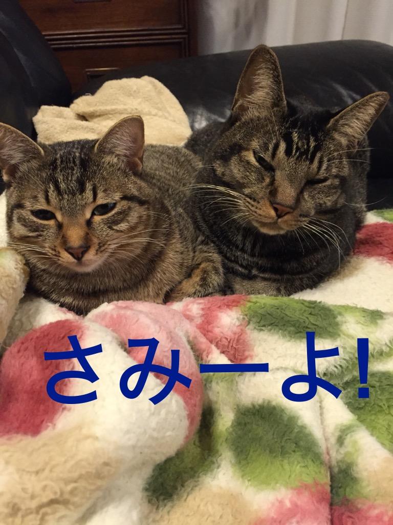 f:id:kasahiteishoku:20161102190943j:plain