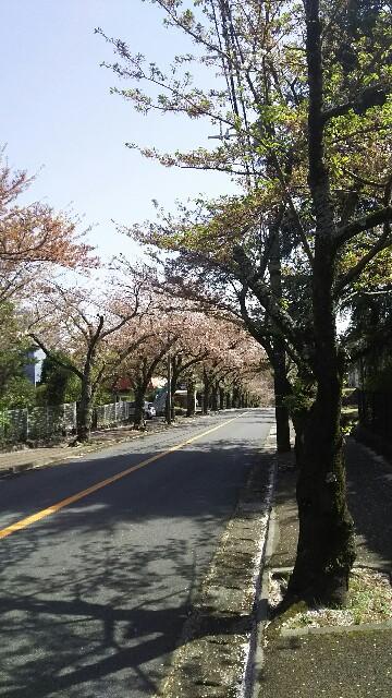 f:id:kasedahiroshi:20180404223417j:image