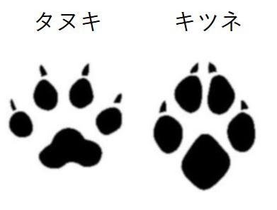 f:id:kasikorera2017:20191108211053j:plain