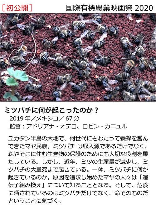 f:id:kasikorera2017:20210206210222j:plain