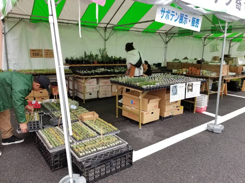 f:id:kasugai-saboten:20191019190519j:plain