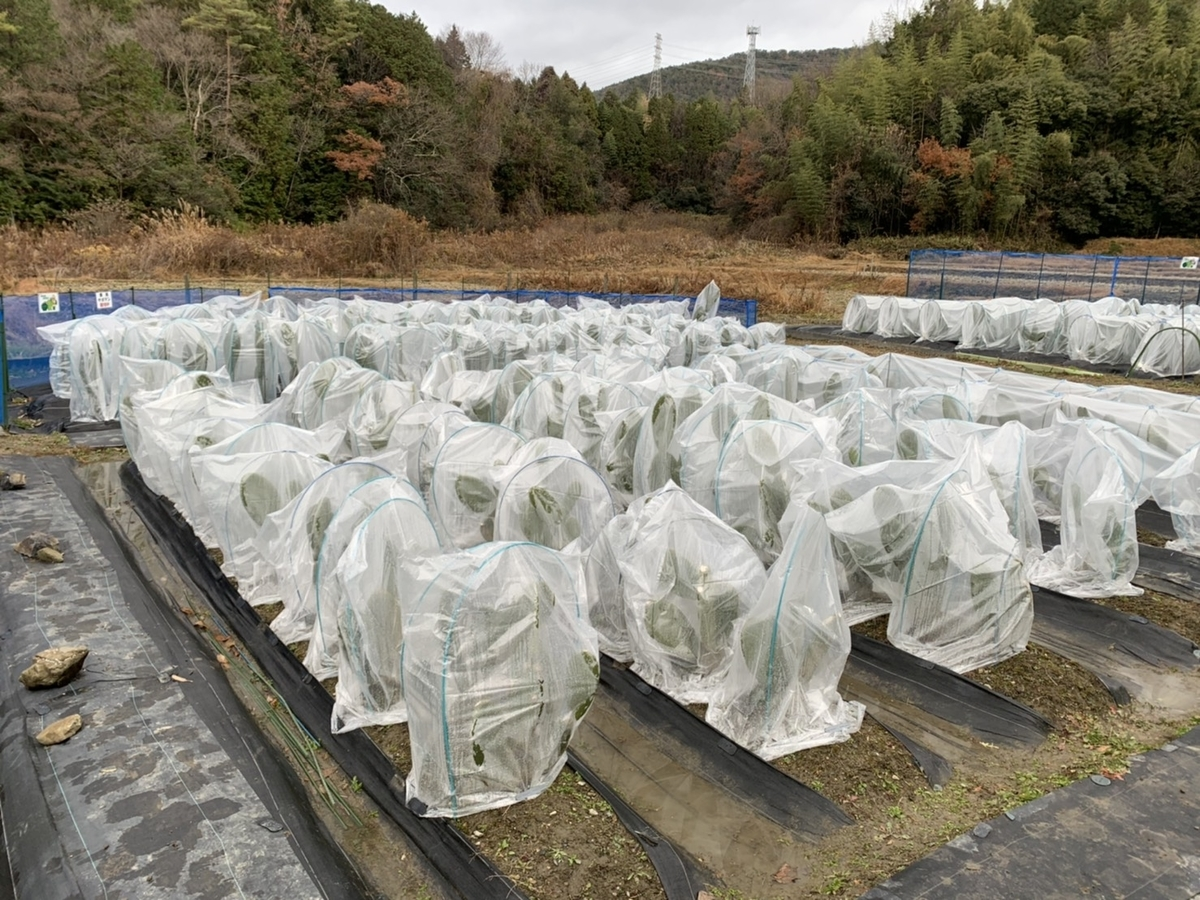 f:id:kasugai-saboten:20201230182627j:plain
