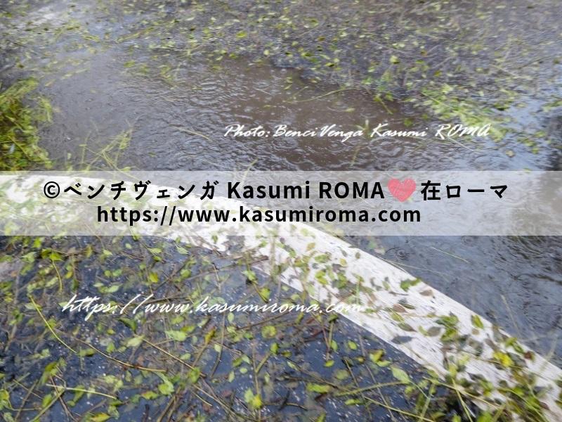 f:id:kasumiroma:20190828221433j:plain