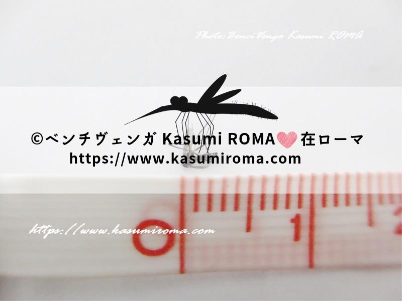 f:id:kasumiroma:20191002182637j:plain