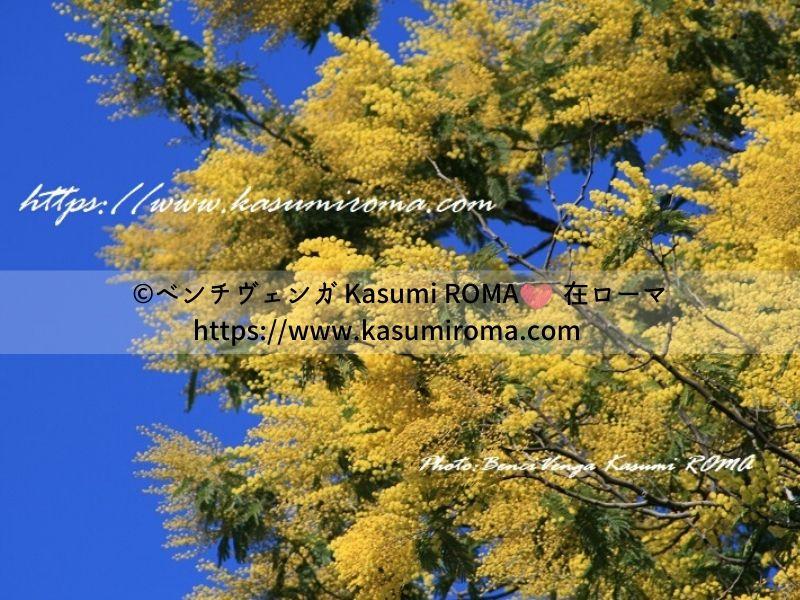 f:id:kasumiroma:20200129171627j:plain