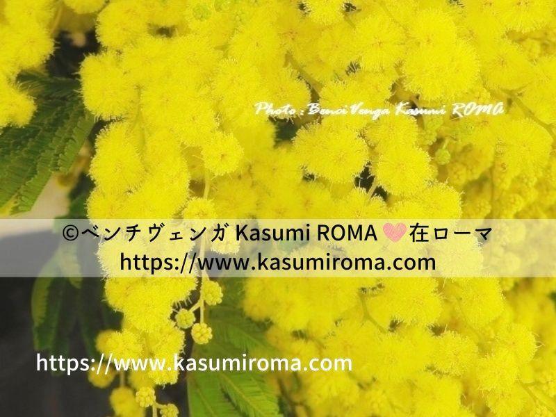 f:id:kasumiroma:20200305030324j:plain