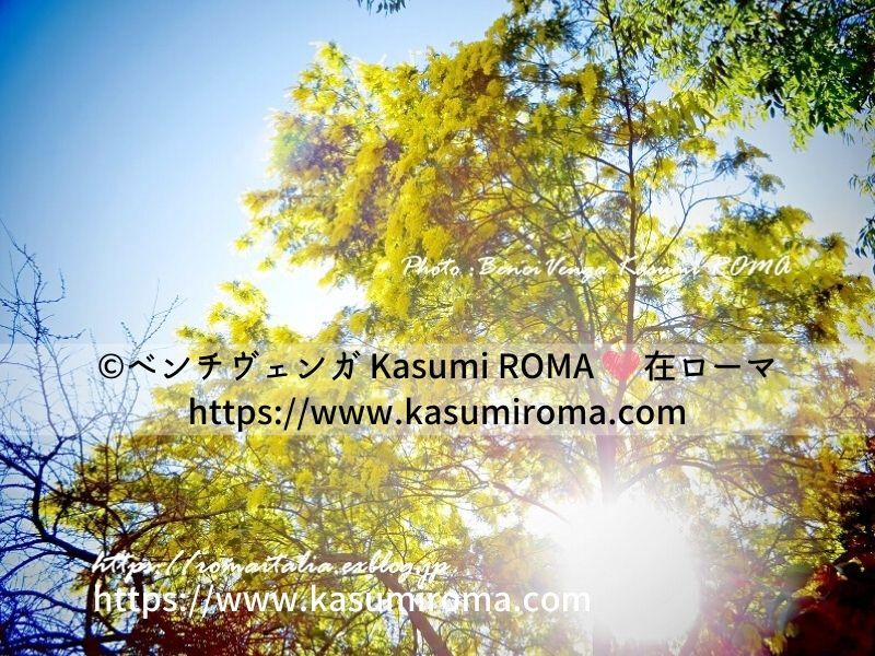 f:id:kasumiroma:20200305030357j:plain