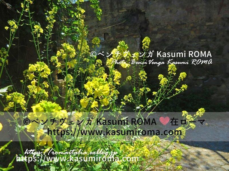 f:id:kasumiroma:20201219172250j:plain