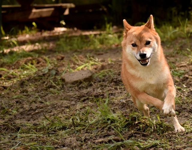 大地を走る犬イメージ