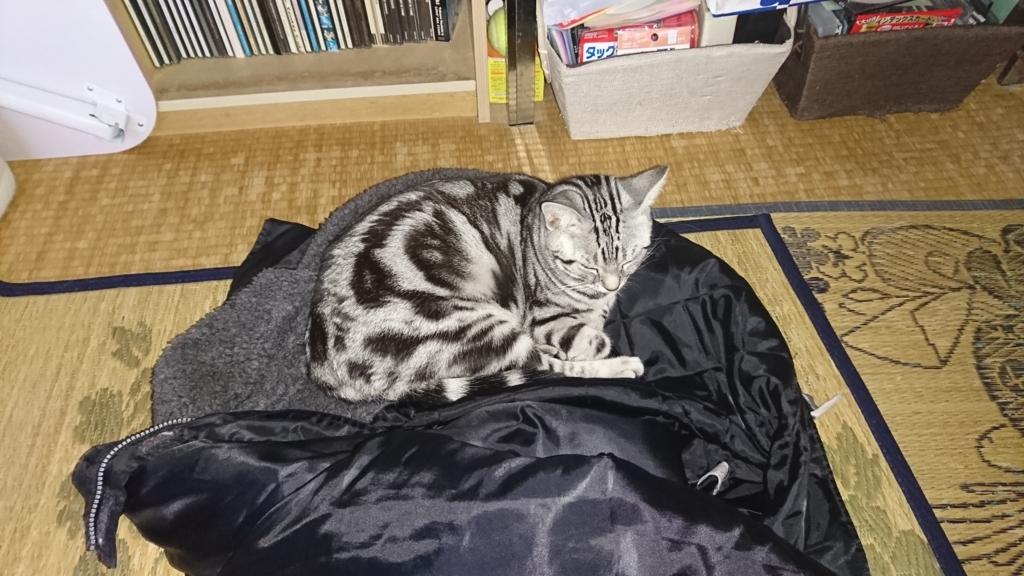 f:id:katagiri-mikan:20170402174906j:plain