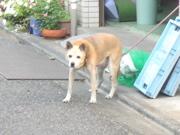 f:id:katakanize:20090926162650j:image