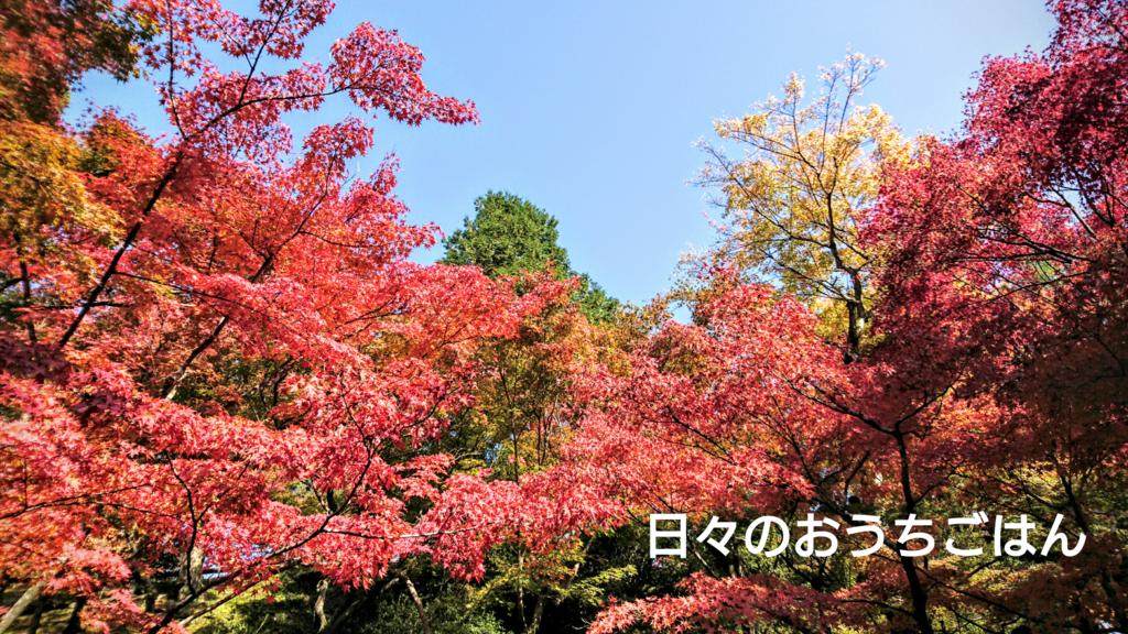 f:id:katakotoya:20161113211513p:plain