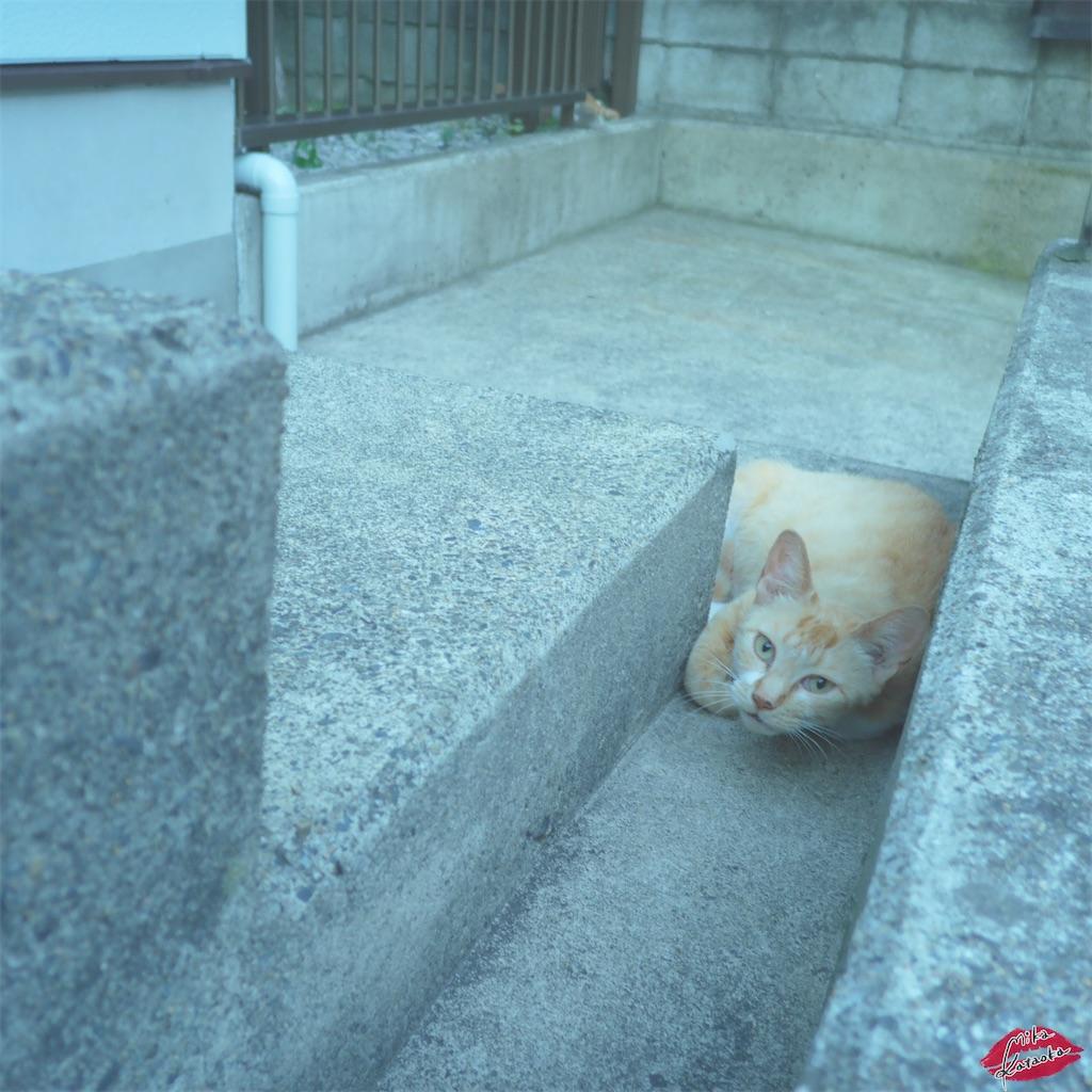 f:id:kataokamika:20200619193529j:image
