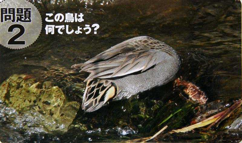 f:id:kataro:20091120131729j:image
