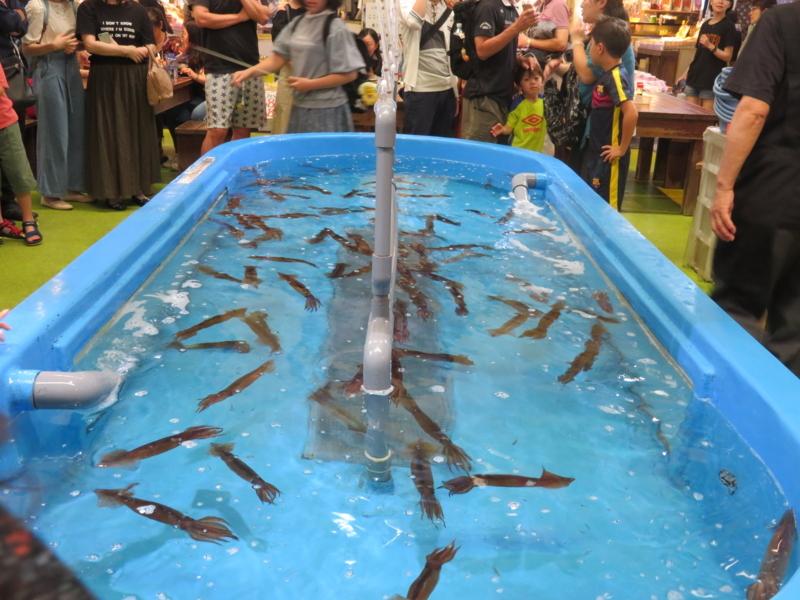 函館朝市イカ釣りの写真