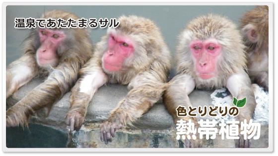f:id:kataseumi:20180830205019p:plain