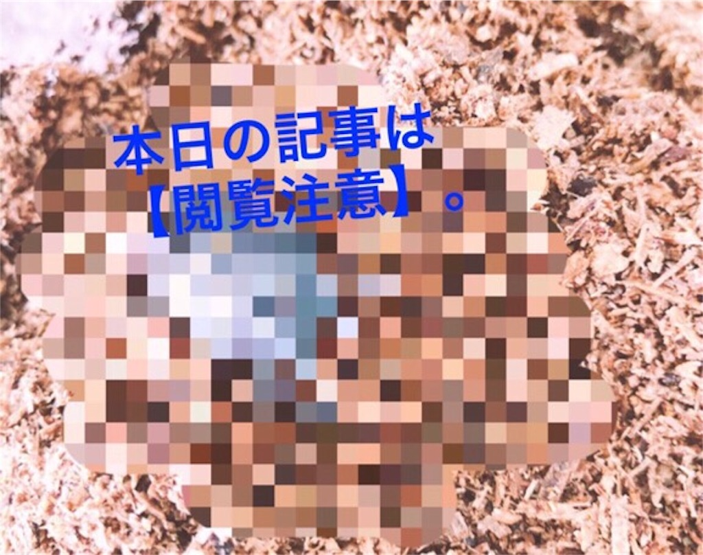f:id:kataseumi:20180925181301j:plain