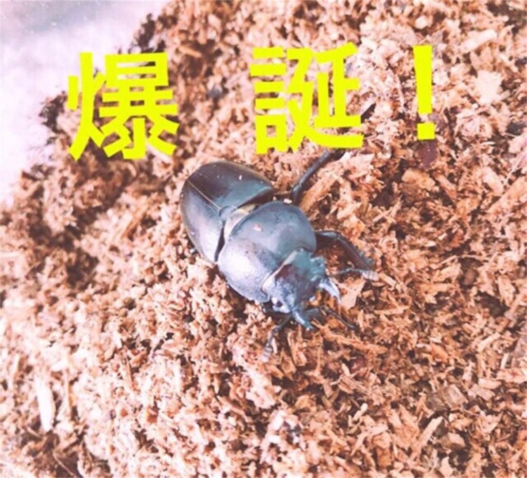f:id:kataseumi:20180925181303j:plain