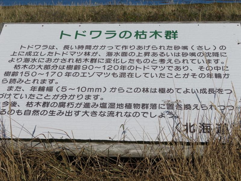f:id:kataseumi:20181029013631j:plain