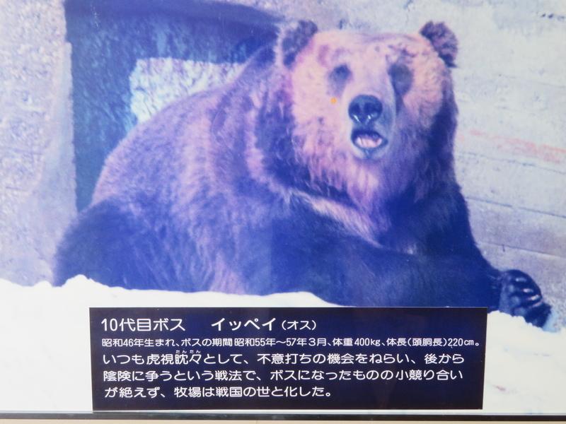 f:id:kataseumi:20190311013920j:plain