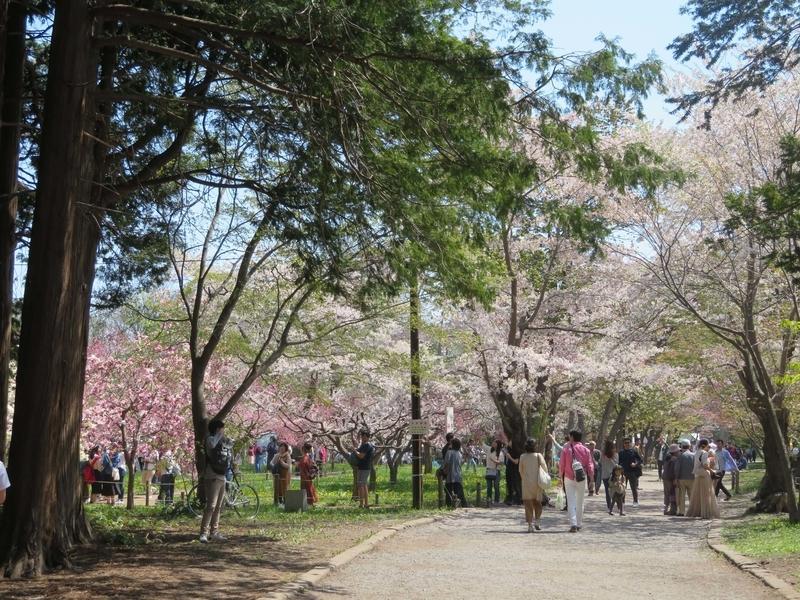 北海道神宮境内写真