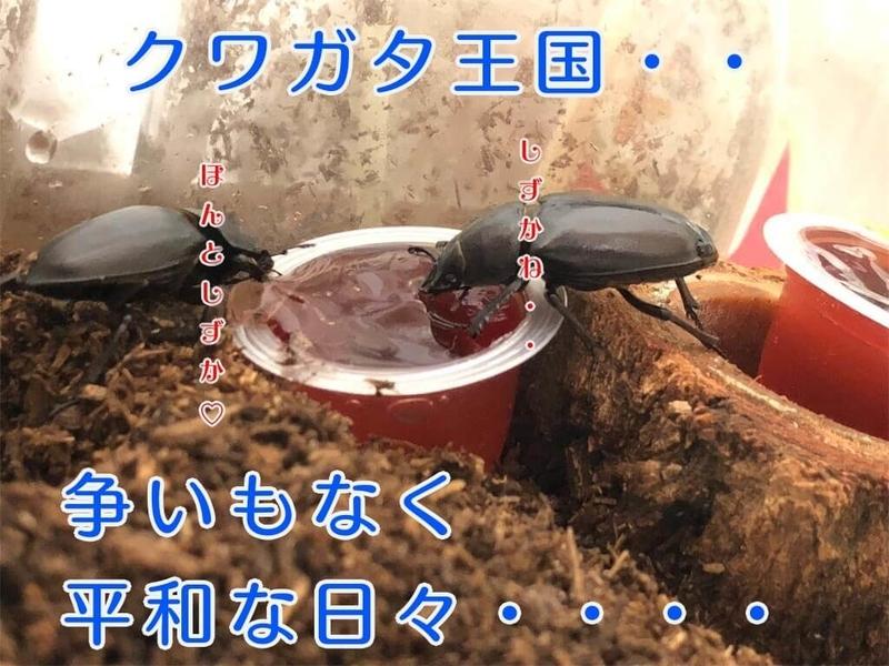 f:id:kataseumi:20190601005637j:plain