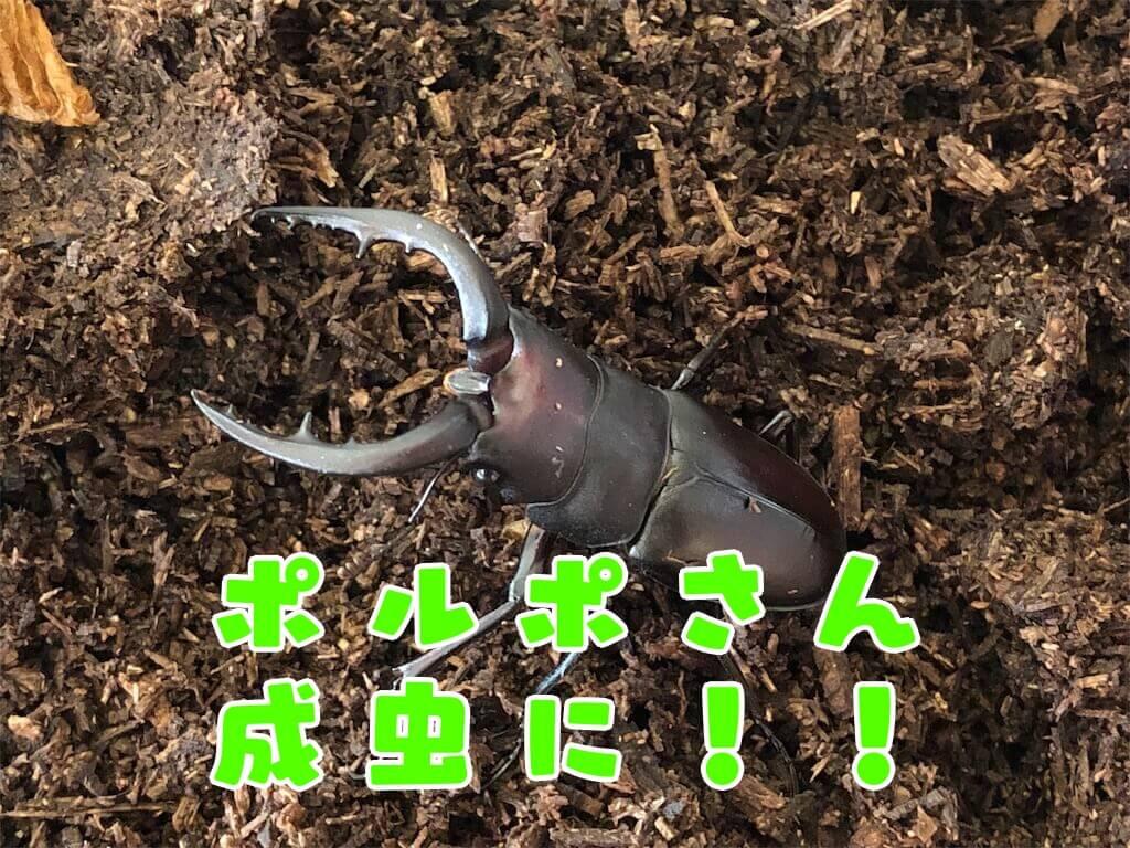 f:id:kataseumi:20190907150358j:plain