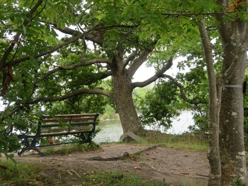 大沼島めぐりの途中ベンチの写真