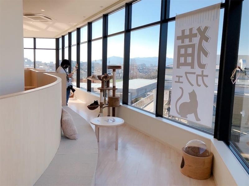 猫カフェ「モフ」窓際の写真