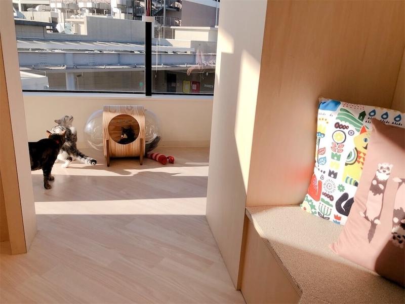 「モフ」で、座っていた所から、窓と猫を見た視界の写真