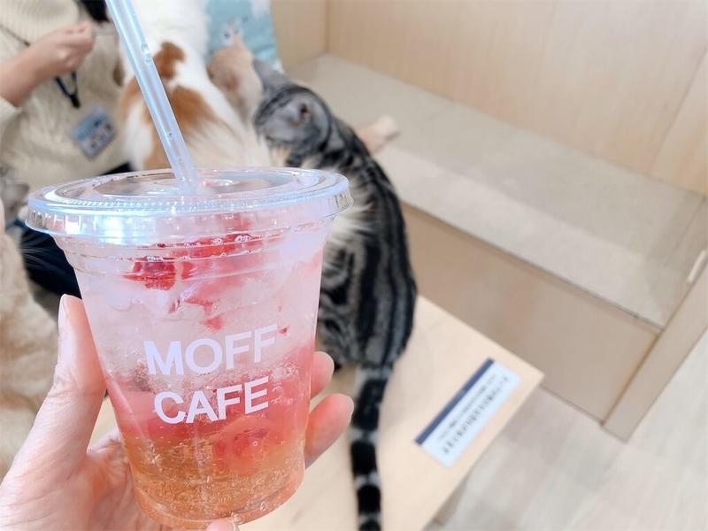 猫カフェ「モフ」のドリンク写真