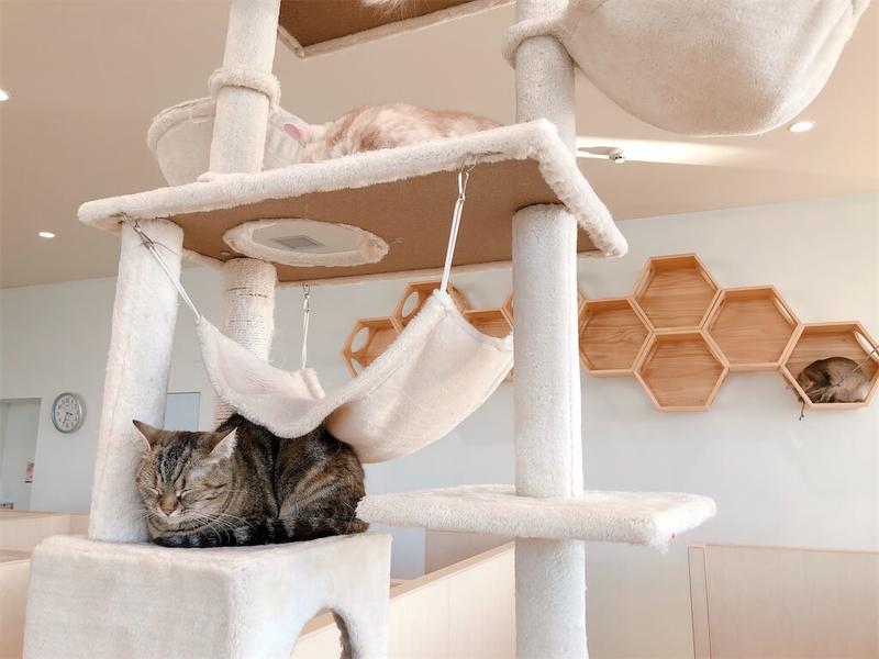「モフ」の猫タワーの写真