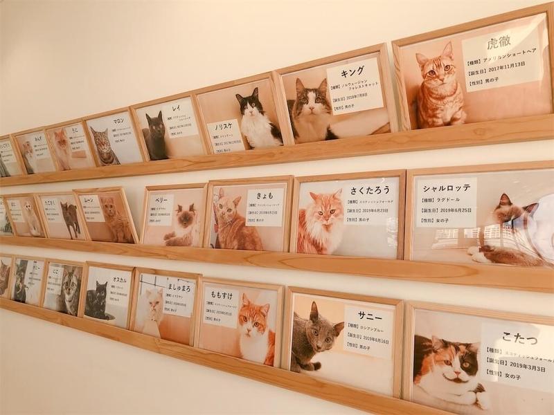 猫カフェ「モフ」の猫紹介の写真