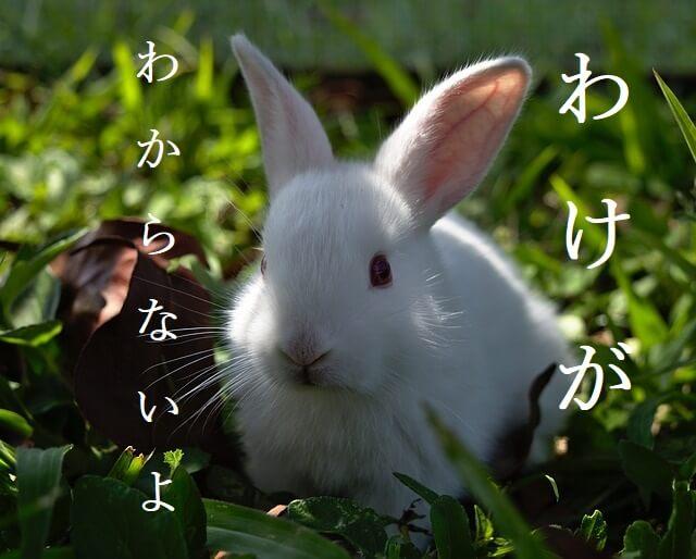 f:id:kataseumi:20210625002136j:plain