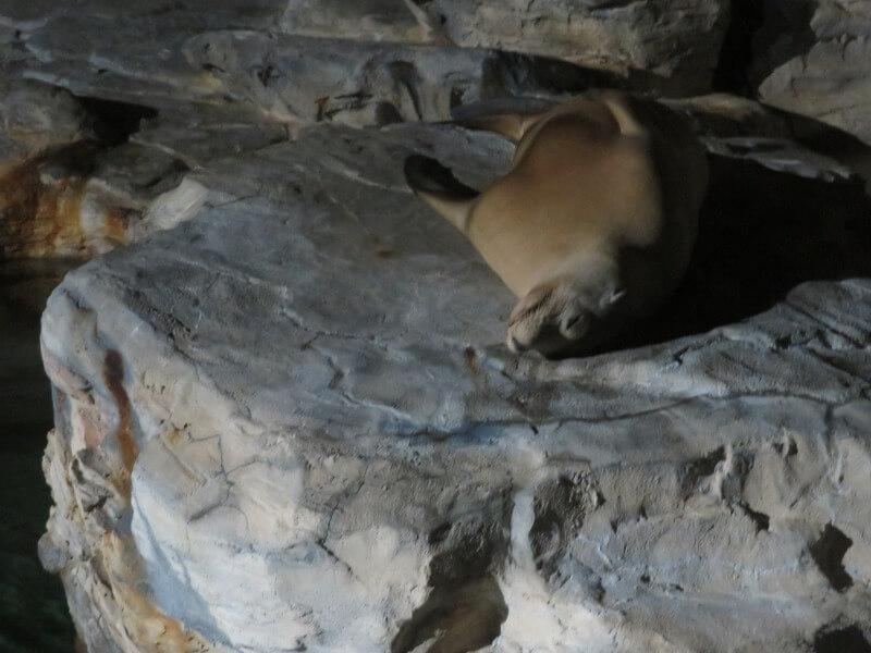 寝ているアザラシの写真