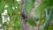 バリ島のリス