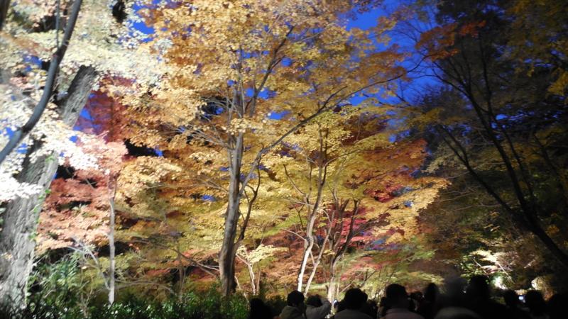 f:id:katayama-lawoffice:20141125214651j:image:w640
