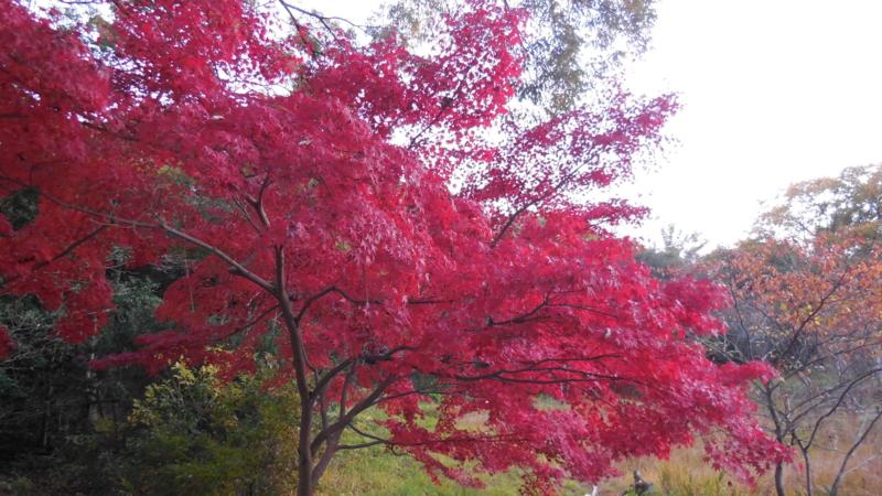 f:id:katayama-lawoffice:20141125214719j:image:w640