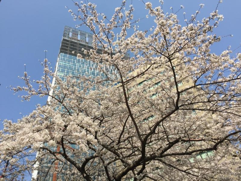 f:id:katayama-lawoffice:20150331232320j:image:w640