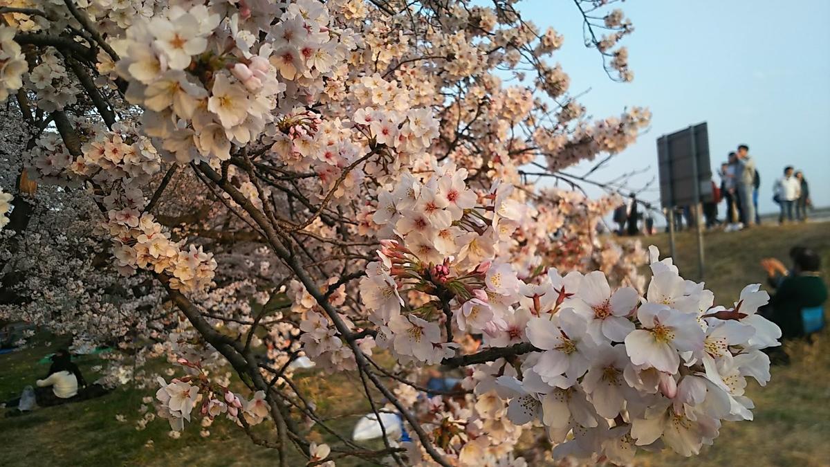 f:id:katayoku_no_hito:20190407172255j:plain