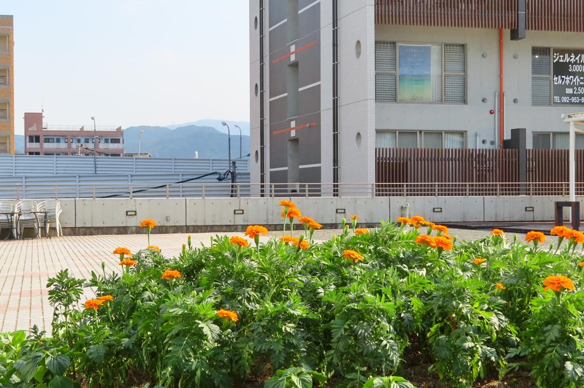 f:id:katayoku_no_hito:20190914152946j:plain