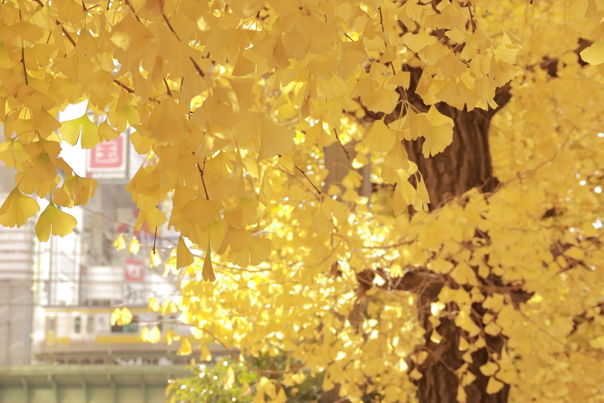 f:id:katayoku_no_hito:20191215104153j:plain