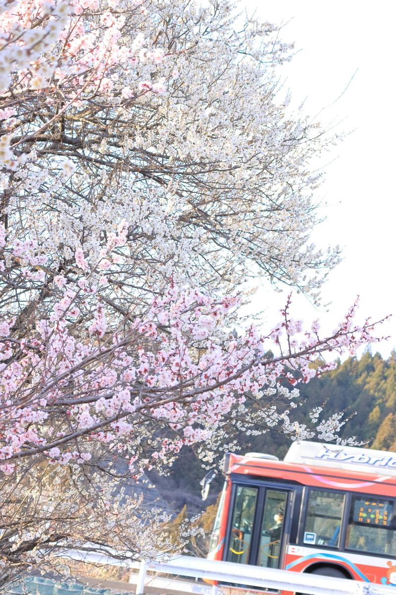 f:id:katayoku_no_hito:20200323164135j:plain