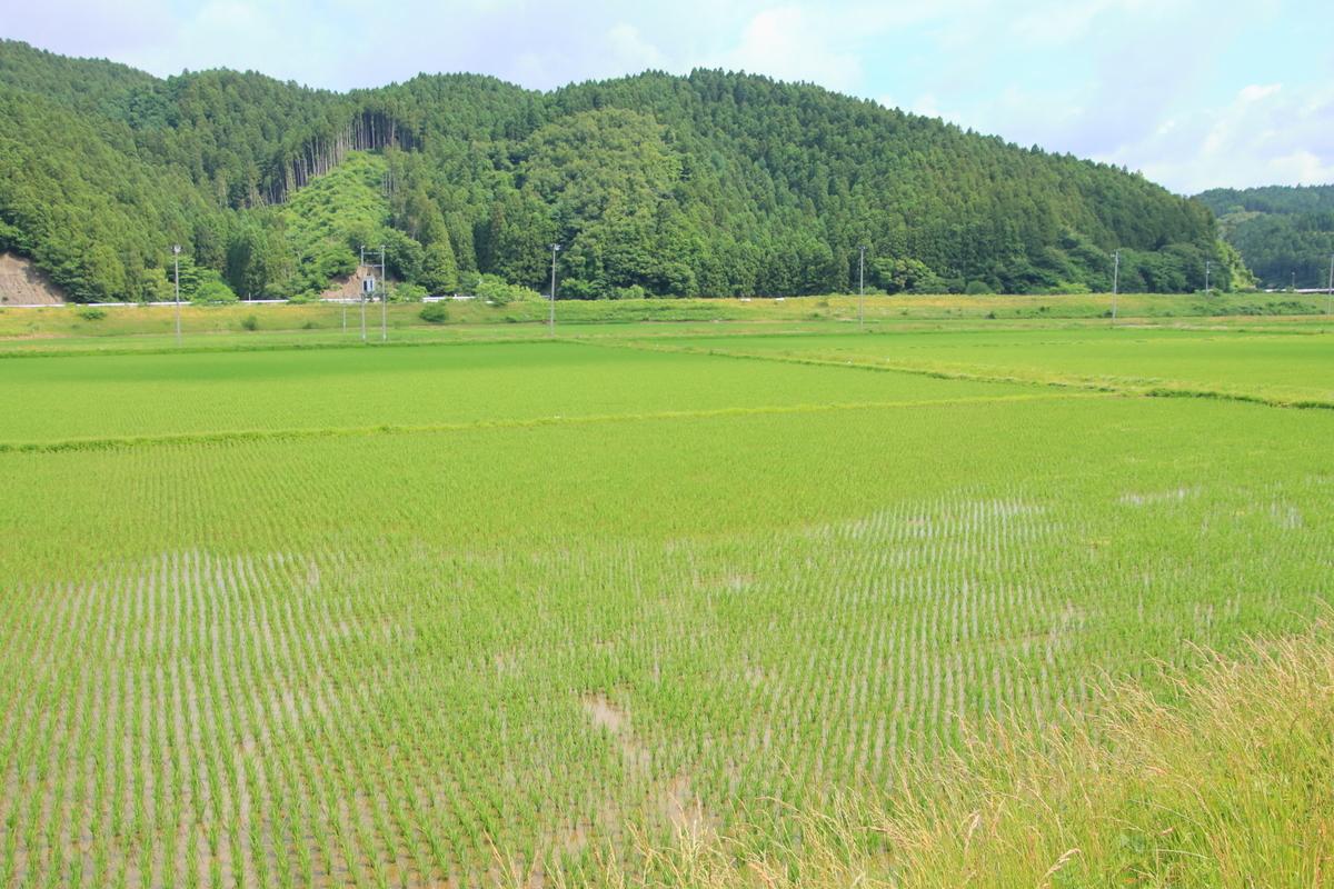 f:id:katayoku_no_hito:20200620084855j:plain